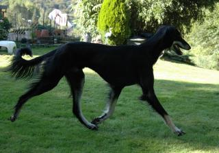 Eby running in the garden